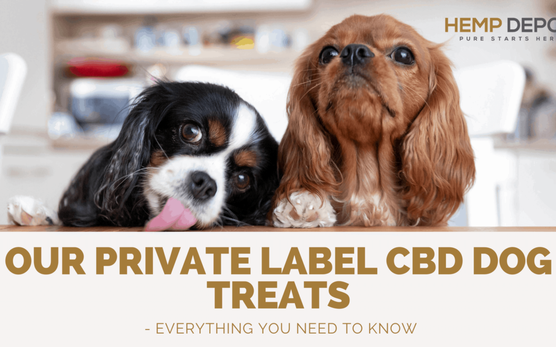 Our Private Label CBD Dog Treats – Everything You Need to Know